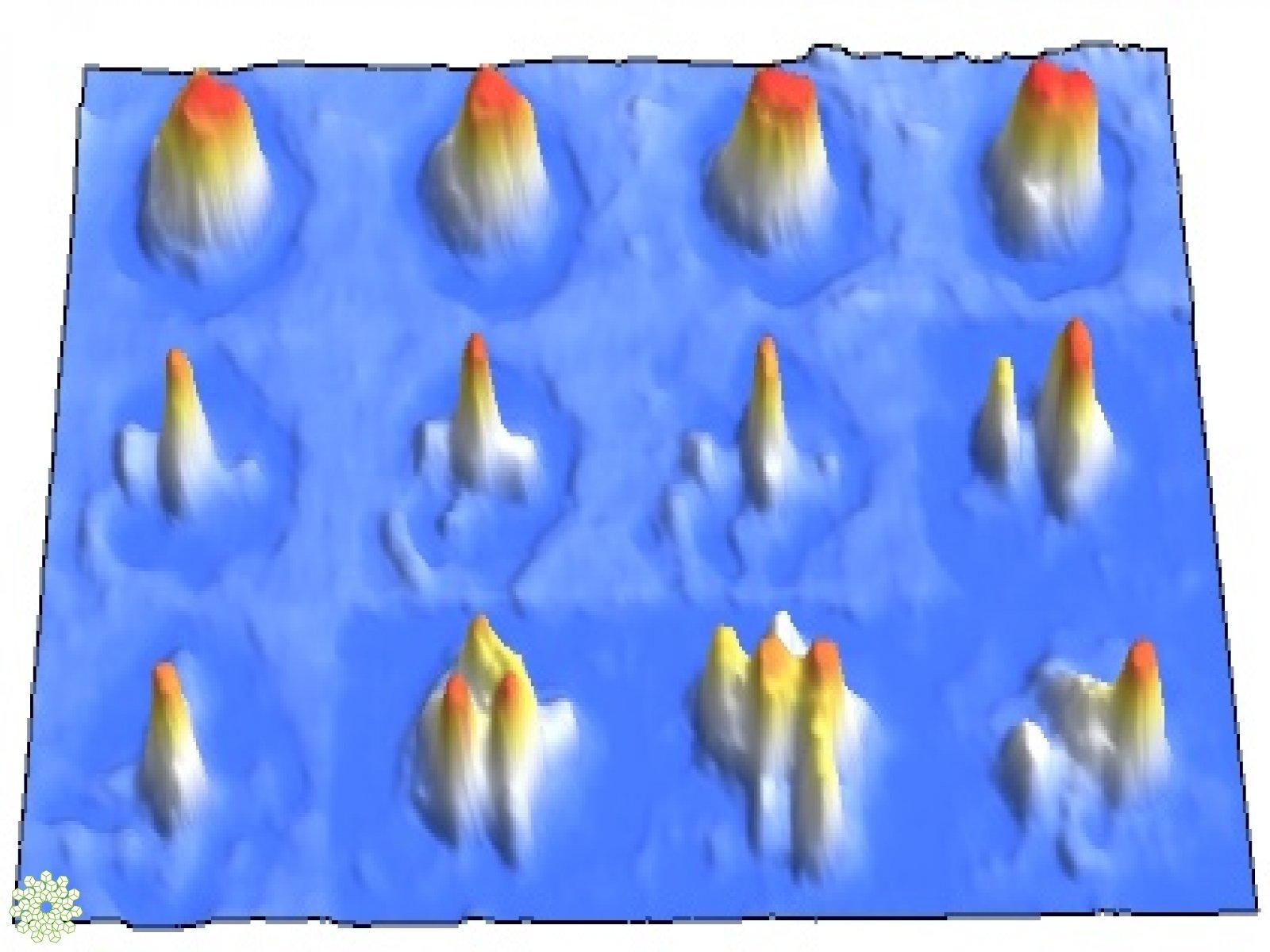 immagine articolo